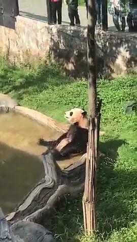 熊猫宝贝泡泡水哦