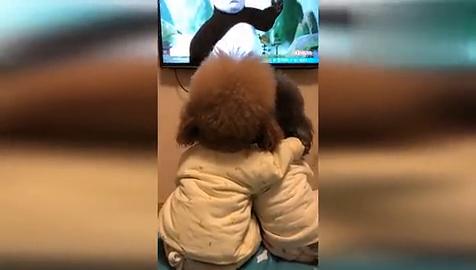 乖狗狗,看会电视睡觉了