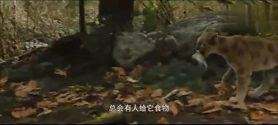 神一般的生物链关系,猎豹抓鱼给狗吃就为了交朋友