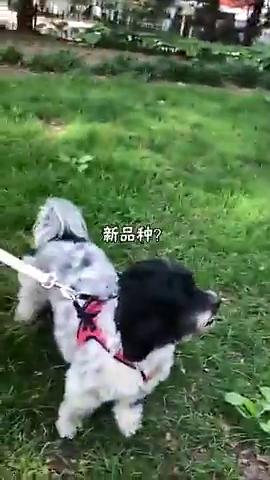 这鹦鹉会学狗叫,弄得旁边的狗狗一脸懵,论掌握一门外语的重要性