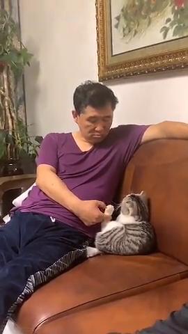 被一只猫崇拜的注视着是种什么体验?飘飘然不?
