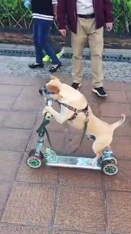 好厉害的狗狗