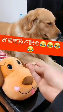 好可怜的狗狗