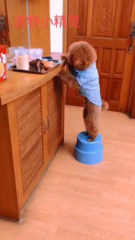好聪明的狗狗知道自己移动凳子偷吃东西