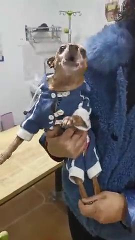 狗狗来医院就害怕