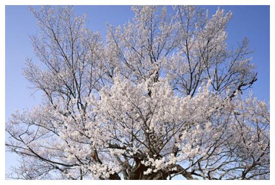 测试:你觉得哪一棵树最美,秒测你是不是好命的人!