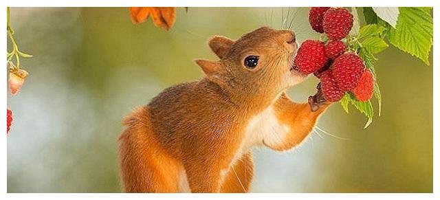 塔罗占卜:选一只可爱松鼠,测你的真爱何时才能到来