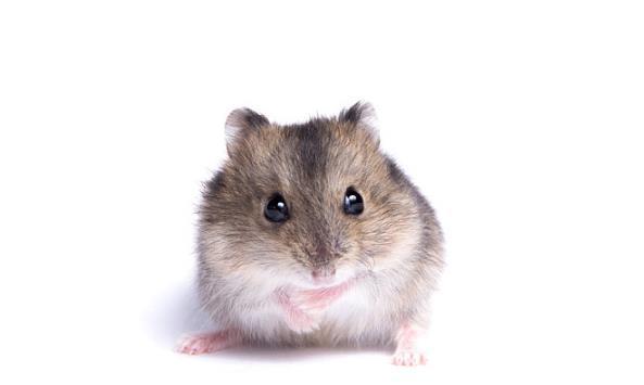 子鼠人2021年运势,生肖鼠3大喜事降临,属鼠人看看什么喜?