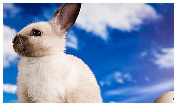 75年生肖兔的毕生寿命,过了45岁后什么命?句句说到心坎里!