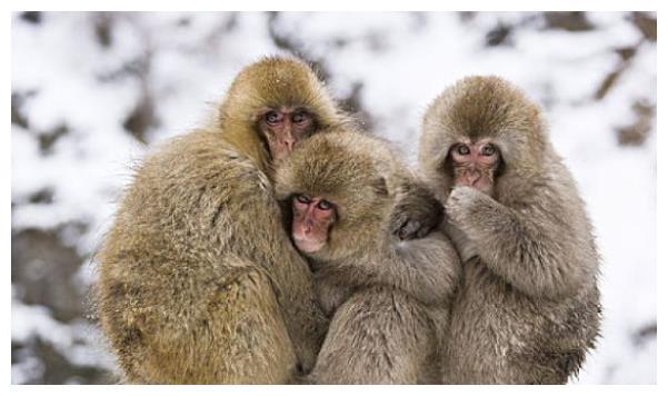 大金猴:你要大喜临头,近期4天躲不过的喜,看看是什么喜?