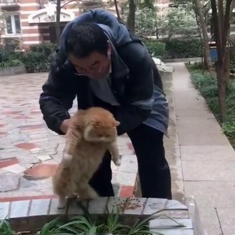 在北京某小区有两只流浪猫,居然胖成猪,一只就50多斤!
