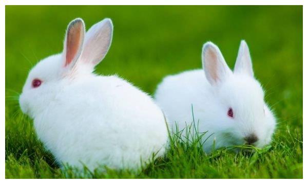 """老一辈人常说,生肖兔在8月将会""""宏兔大展"""",翻身成为人上人!"""