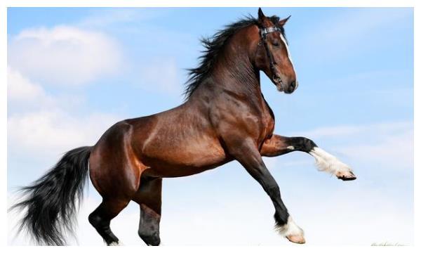 """同年不同命,尤其是生肖属马之人,出生在这几月""""财运""""最好!"""