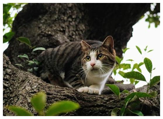喂养流浪猫,没想到它将小猫都带了过来,猫:我们现在都是你的猫