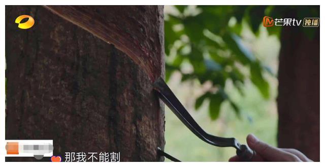 《向往的生活》何炅分农活,周深直接拒绝,谁发现张子枫的反应?