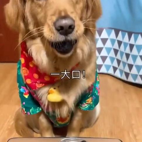 狗吃臭豆腐怀疑人生,最后这表情让我无语,笑死要偿命!