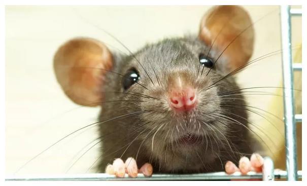 不出3天,属鼠人会遇见下面1个人,是你命中最大的贵人!