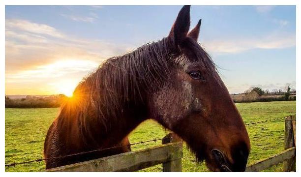 心理测试:假如有4匹老马,哪匹最有灵气?测你晚年是享福命吗?