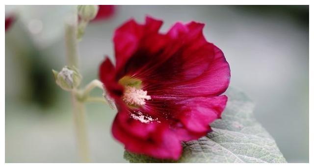 在接下来的一周,桃花盛开,你可以收获真爱,余生有四个主要星座
