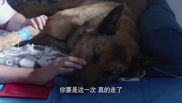 警犬:警犬被宣布死亡,怎料听完主人的真情告白,竟奇迹般活了