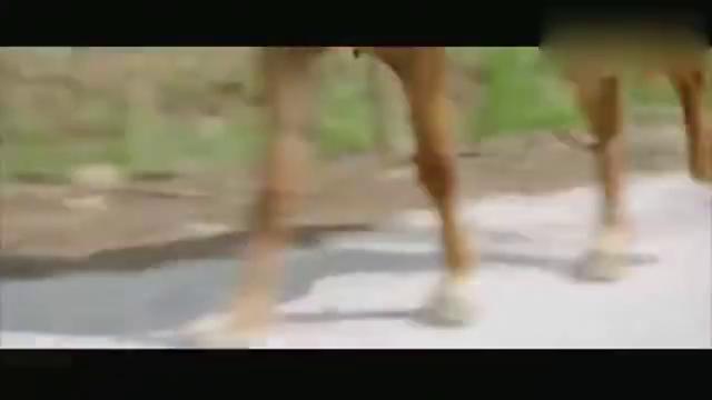 山炮进城 三大爷、朱大海乘胜追击,陈有亮驱车栽沟!