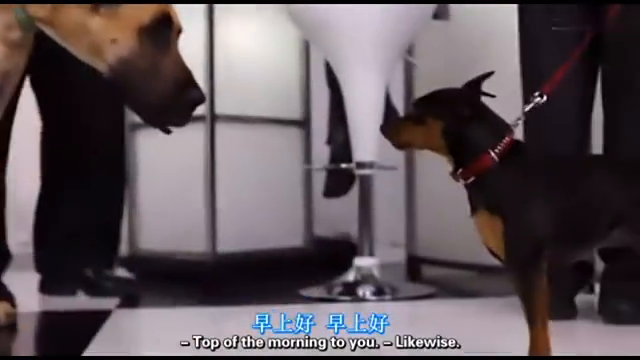 """狗狗和主人""""撞毛"""",相似度极高,到底是谁在模仿谁"""