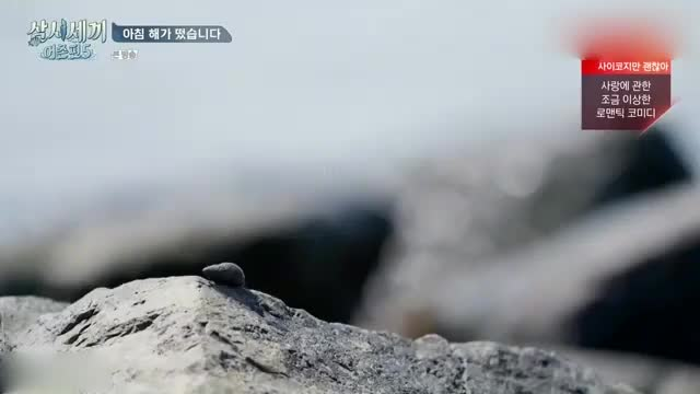 一大早被车胜元吵醒,李光洙也赶紧起床,却发现一只苍蝇