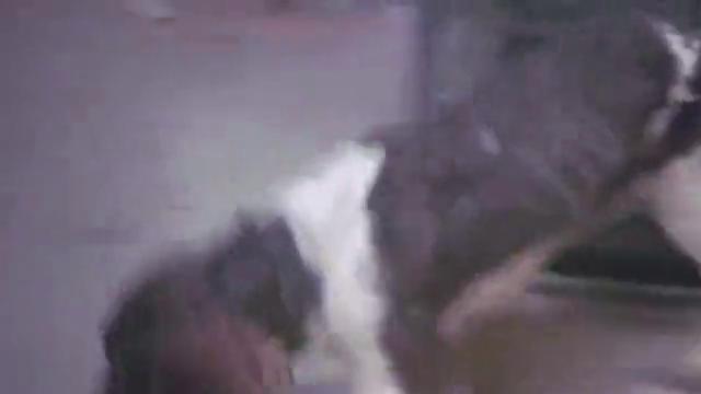 犯罪分子用狗运毒,不料早就被警察盯上,被堵在屋里一窝端