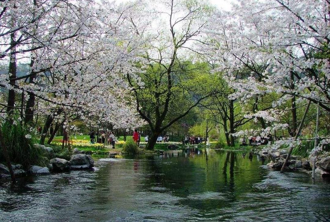 江南水乡风景如画,到姑苏城转一转,将此处风情尽收眼底