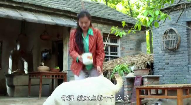 心机儿媳虐待小羊,没想到竟误伤婆婆,害得她躺进医院!