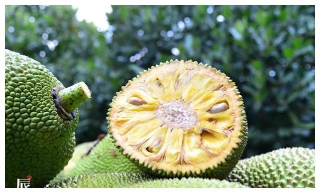 辰颐物语: 热带水果皇后-海南菠萝蜜