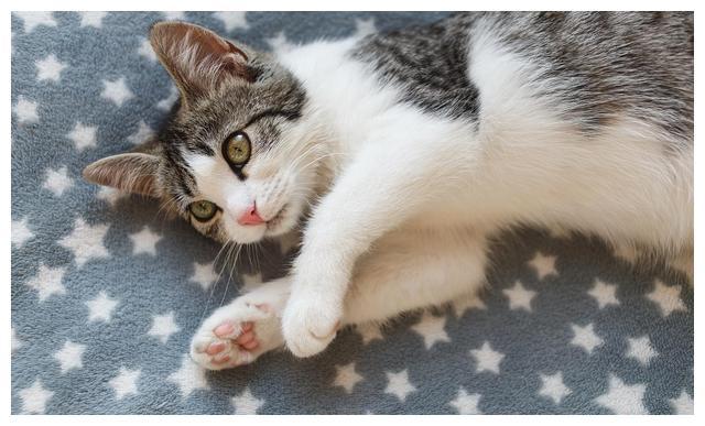 猫咪分阶段喂养,到底是智商税还是真的有必要?