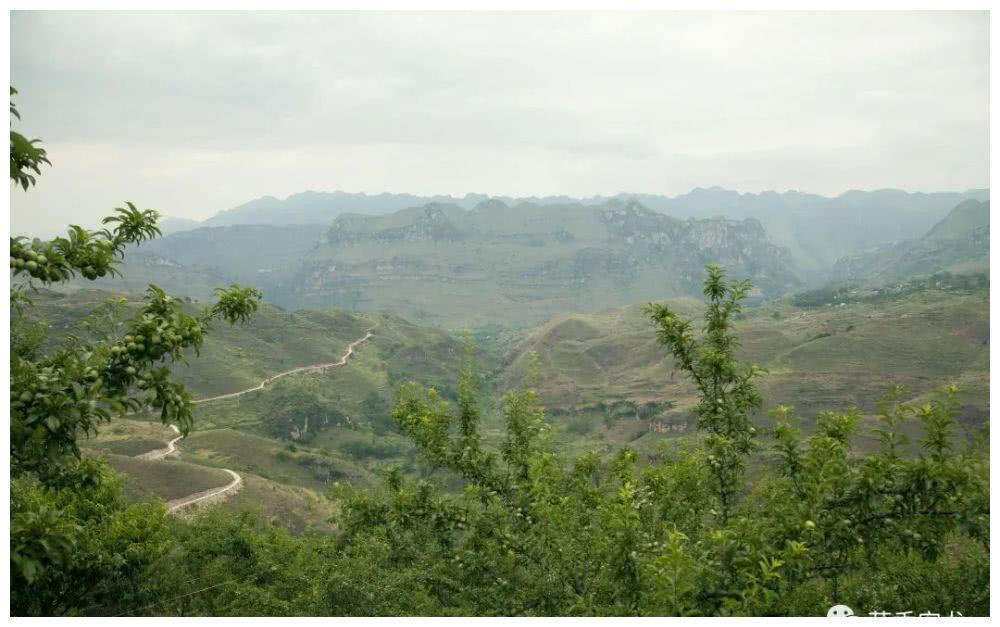 退役军人自创阿藏李产业,走向脱贫致富路