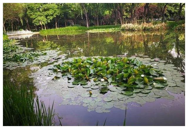 池塘钓鱼:一侧是芦苇,一侧是光水区,怎么选择钓点?