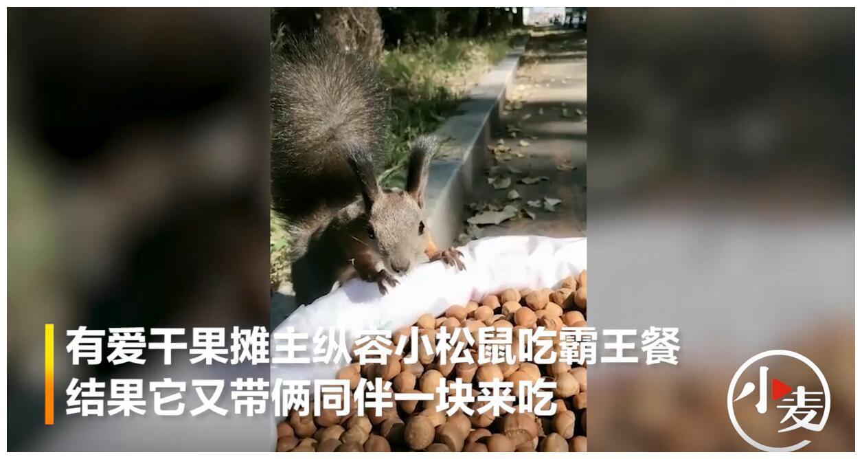 有爱干果摊摊主纵容小松鼠吃霸王餐,结果它又带俩同伴一块来吃!