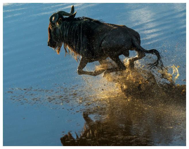 """非洲神秘的""""冥河"""",颜色光鲜亮丽,动物靠近就变""""化石"""""""