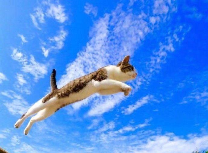 猫咪一跃而起,预示考试成功!转发评论留言吧!