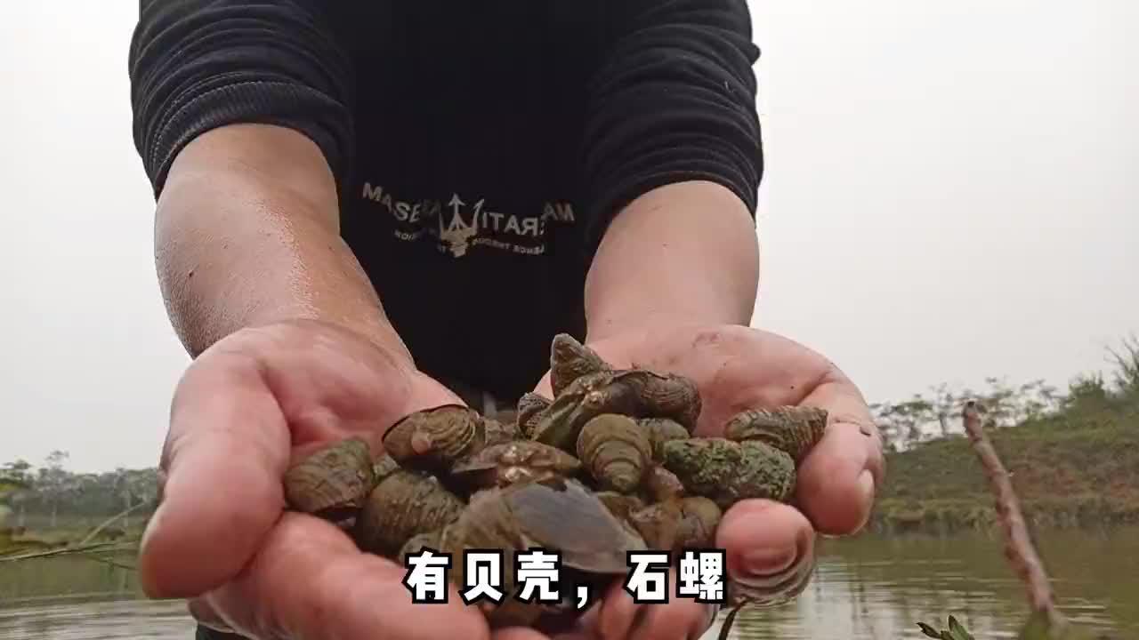 到乡下河边摸石螺又是一道美食天然野味很多人喜欢吃