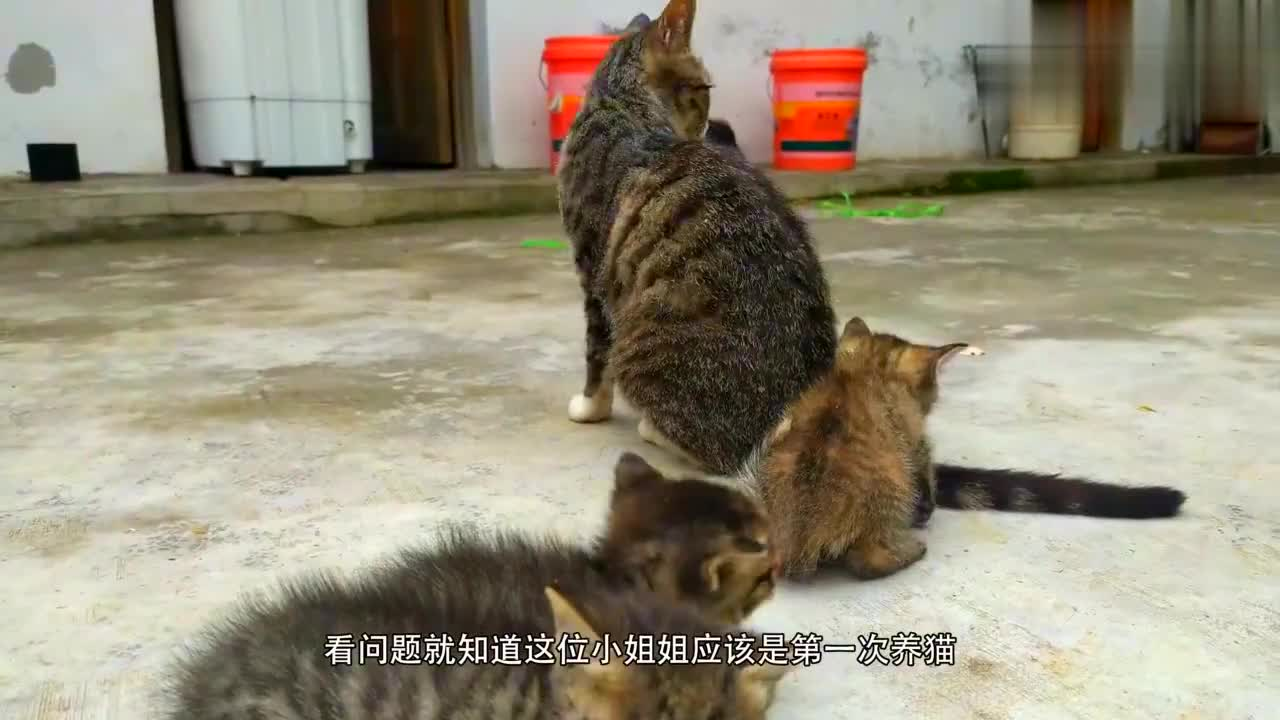 小奶猫能不能吹空调?