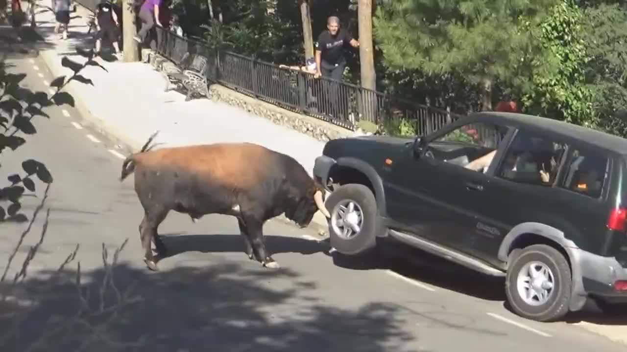 一家人坐在车里看斗牛,谁料公牛突然冲了过来,网友:这牛脾气!