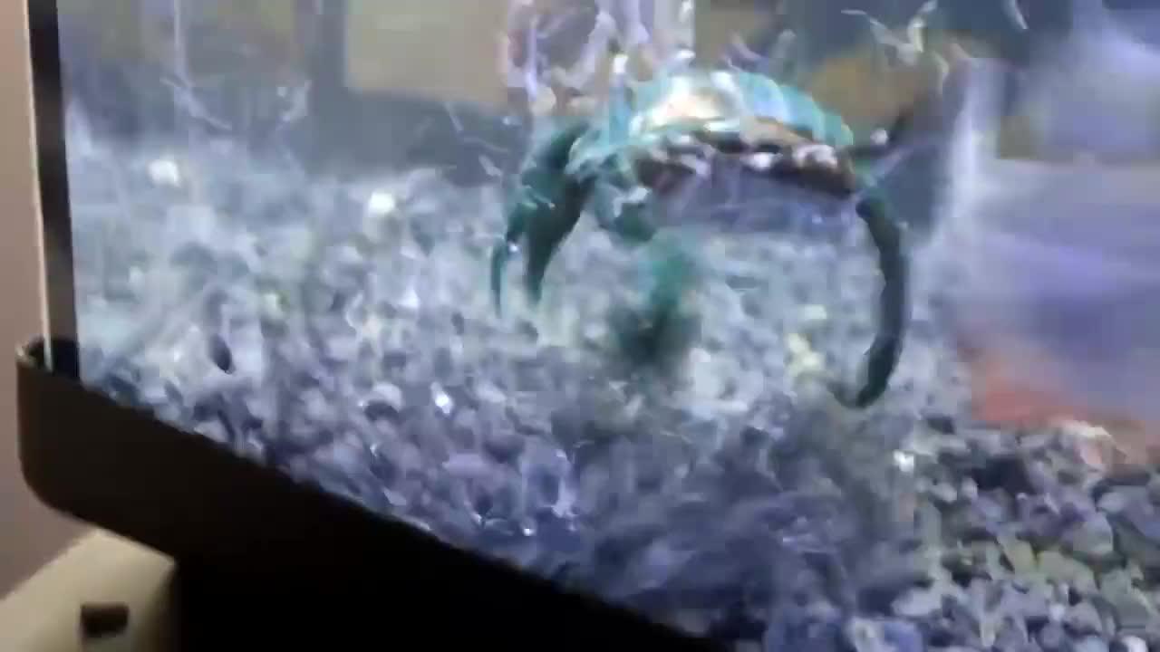 饥饿的食人鱼遇上毒蝎子,会发生什么呢?结果太让人意外
