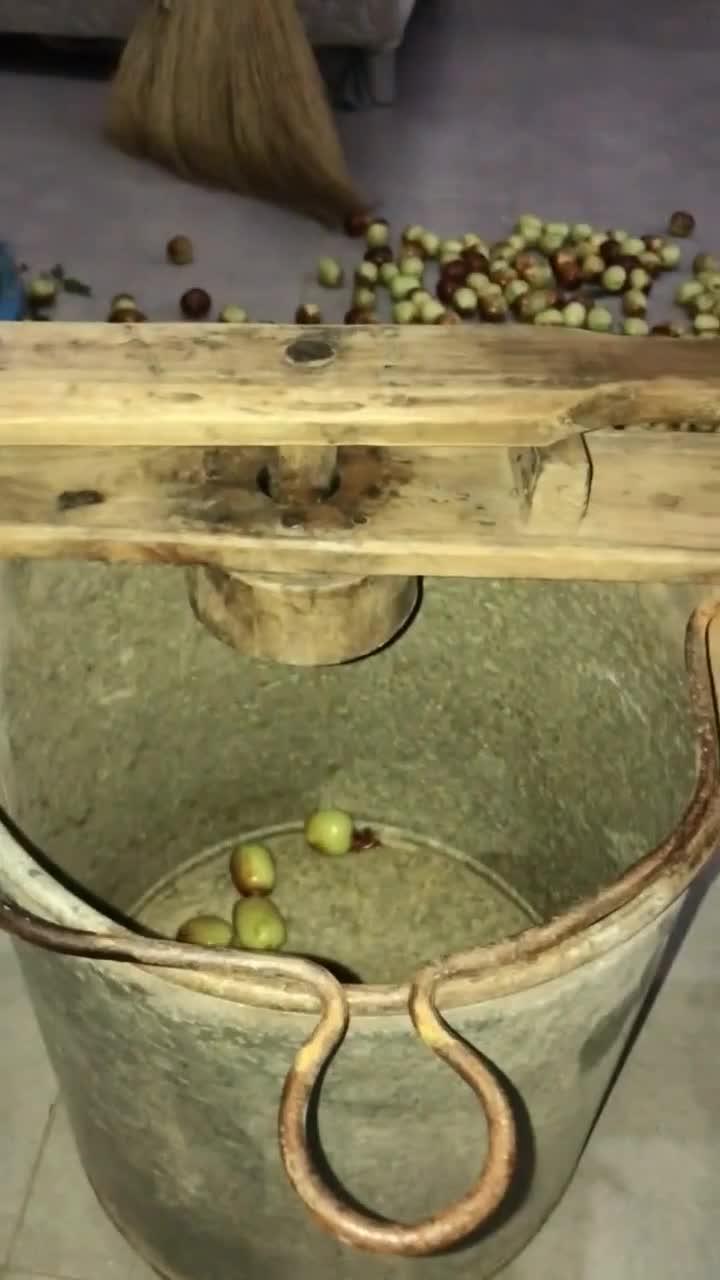 原来这种蜜枣也是这种枣做出来的竟然一直都没吃出来真是长见识了