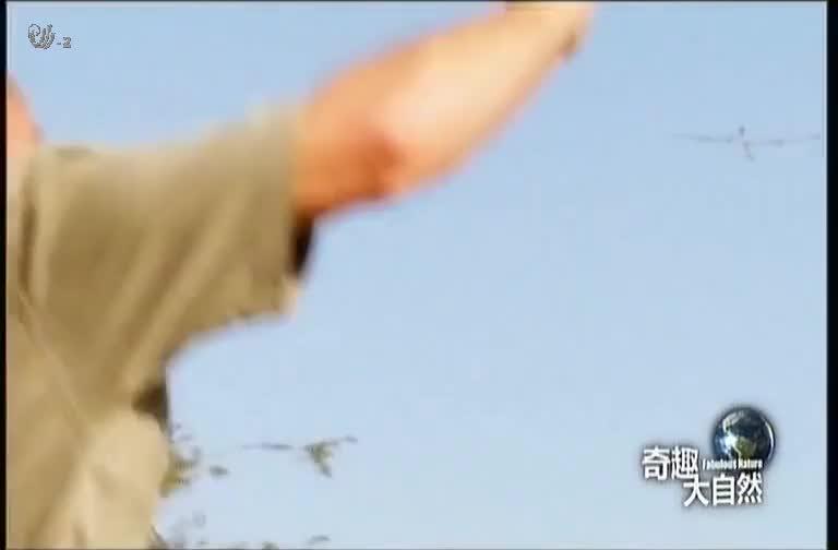 犀牛将游客撞飞,一对夫妇吓得落荒而逃,他们举动让犀牛赶到威胁