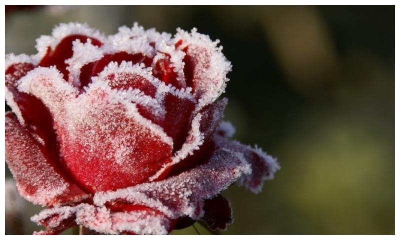 1月下旬开始,贵人助力,鸿运天降,财利丰厚的生肖