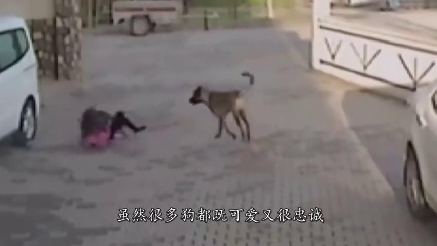 恶狗暴力袭击小女孩,勇敢母亲拼死相救,监控拍下揪心全程!