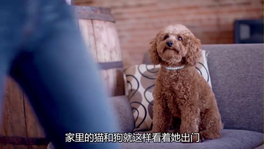 猫狗大战,在主人不在家的时候,宠物们展示中国功夫厮打在一起!