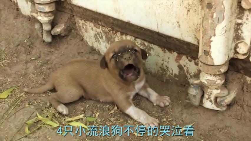 流浪狗遭人投毒,幼崽哭着想要叫醒妈妈,让人看后纷纷落泪!