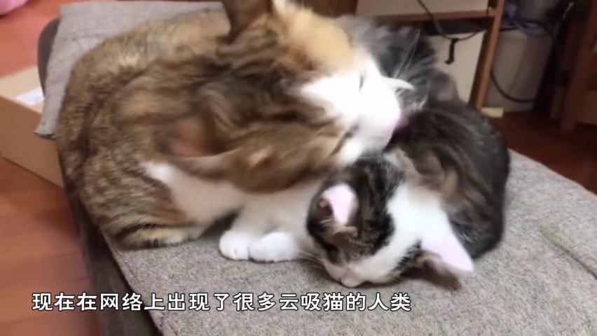 """正宗""""猫步""""怎么走?橘座亲自上阵教你,网友:六亲不认的步伐"""