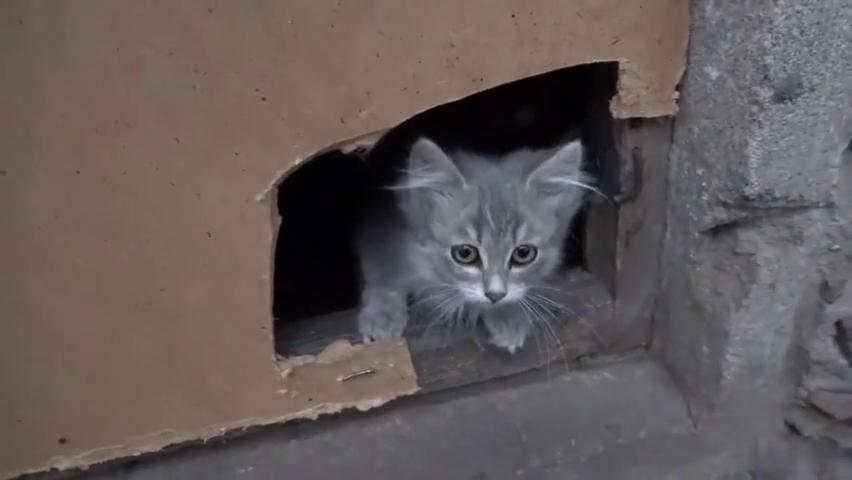 在小区下发现流浪猫,用食物诱惑出来,今晚就来拐走