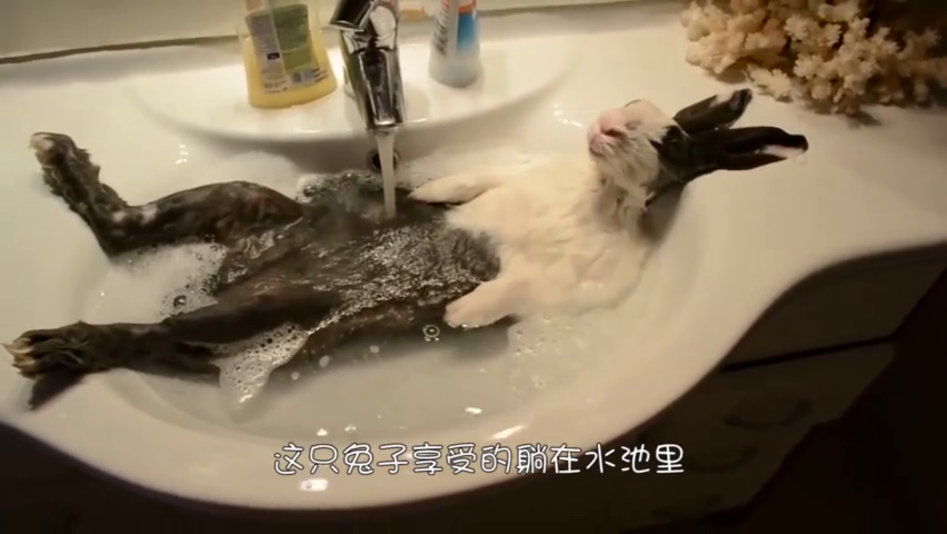 主人跟五只阿拉斯加洗澡,当花洒打开之后,接下来请忍住不要笑